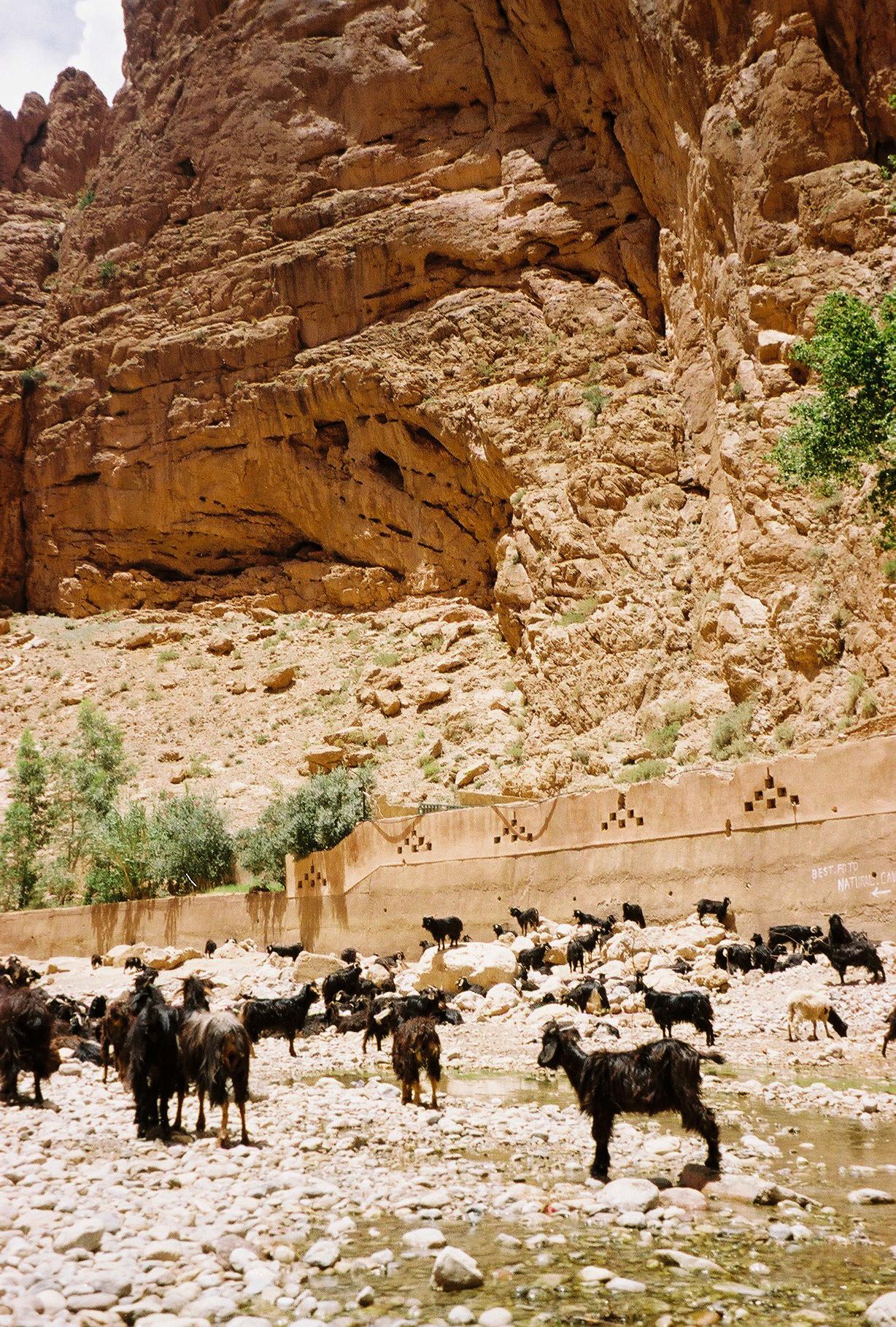 Марокко фото, Путешествие в Марокко, Животные в горах фото
